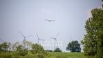 380KV Windkraft und Großvögel