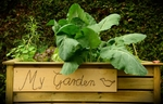 Gemüse im Hochbeet, Garten im Kleinformat
