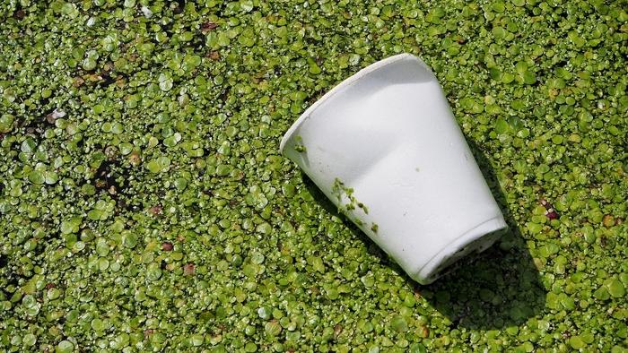 Leergetrunkener Pappbecher entsorgt in der Botanik.
