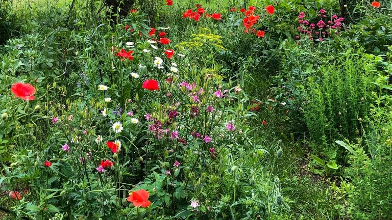 Verschiedene Blumen im Garten.