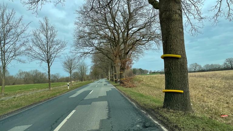 Bäume mit angelegtem Schutz für Straßensanierung