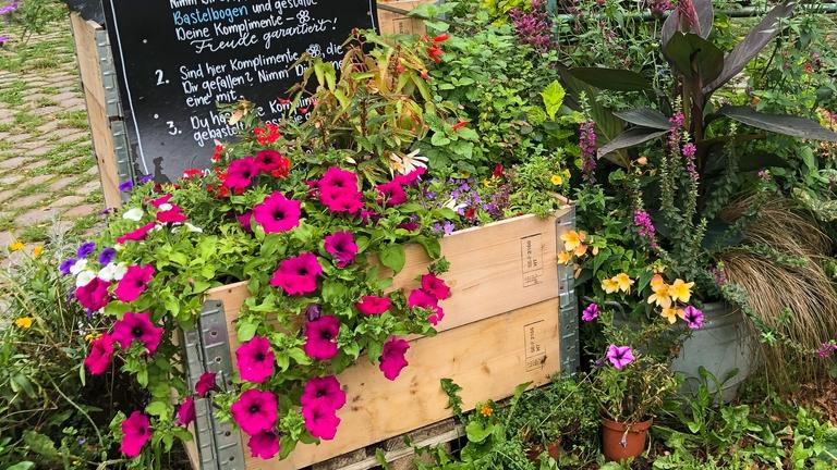 Blumen im Komplimentegarten