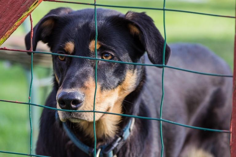 Hund hinter einem Zaun.