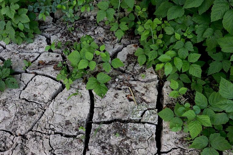 Ausgelaugter Boden